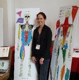 anatomy resources, bone magnets, dance anatomy, dance education