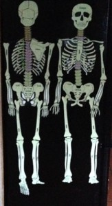 anatomy resources, dance education resources