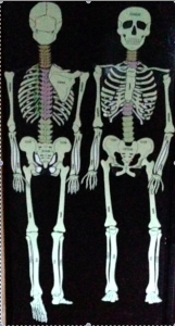 anatomy resources, dance education resources,