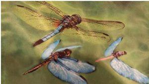 Dragonfly choreography