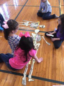 Bone Apart, Dance Education, Anatomy, Bone Apart